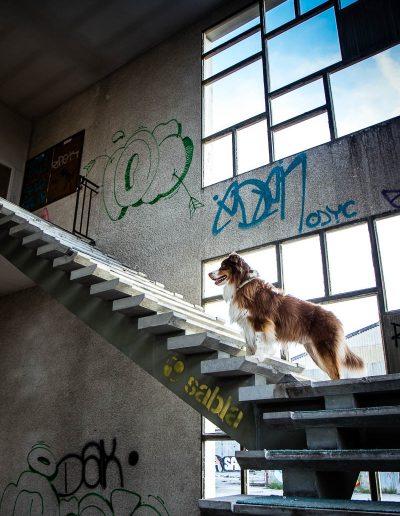 Urbex dog